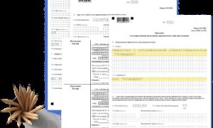Как добавить коды ОКВЭД для ООО в 2021 году
